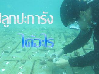 ปลูกประการัง