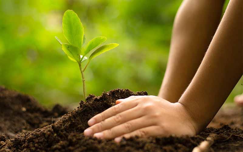 save environment tree